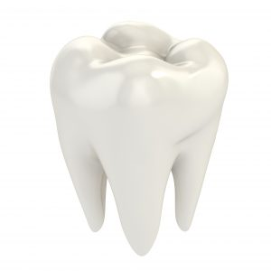 white crown of the tooth